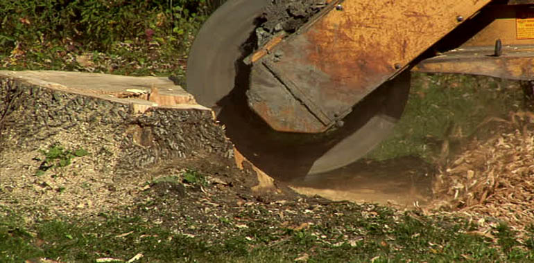 BATTLE CREEK STUMP GRINDING